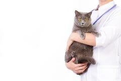 El veterinario sostiene un gato en sus brazos Fotografía de archivo