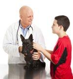El veterinario tranquiliza adolescente sobre perro Imagen de archivo