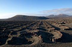 El viñedo volcánico, Lanzarote, islas canarias Fotografía de archivo libre de regalías