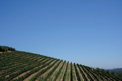 El vi?edo en el estado del vino de Tokara, Cape Town, Sur?frica, adquirida un d?a claro Las vides se plantan en filas en la lader fotos de archivo libres de regalías