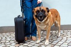 El viajar con el perro Imagen de archivo