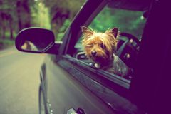 El viajar con el perro Imágenes de archivo libres de regalías
