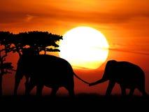 El viajar de los elefantes Fotos de archivo libres de regalías