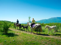 El viajar de los jinetes del caballo Fotos de archivo libres de regalías