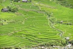 El viajar en los campos del arroz del PA del Sa en Vietnam Imágenes de archivo libres de regalías