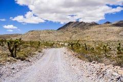 El viajar en un camino sin pavimentar con una área remota cubierta en Joshua Trees del parque nacional de Death Valley; montañas, fotos de archivo libres de regalías