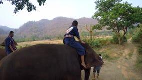 el viaje 4K de turistas monta los elefantes asiáticos, caminando en el bosque de Tailandia almacen de metraje de vídeo