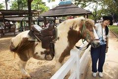 El viaje tailandés de la mujer del viajero y la presentación para la foto de la toma con la situación enana del caballo se relaja fotografía de archivo
