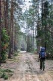 El viajero está caminando en el sendero a través de bosque solamente foto de archivo libre de regalías