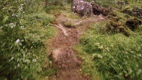El viajero o el aventurero sigue la trayectoria aislada en bosque metrajes