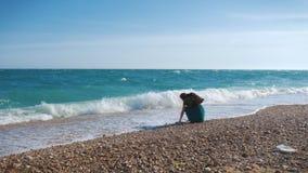 El viajero pelirrojo joven de la muchacha con un sombrero de vaquero y una mochila vaga a lo largo de la playa del mar almacen de metraje de vídeo