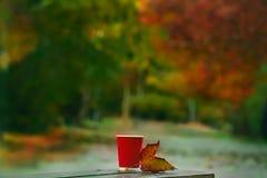 El vidrio y el otoño hojean en un banco en parque del otoño imagenes de archivo