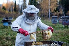 El viejo apicultor recolecta la miel Imágenes de archivo libres de regalías