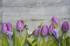El viejo fondo de madera gris con los tulipanes blancos púrpuras, el snowdrop y el azafrán confinan en fila y espacio vacío de la Imágenes de archivo libres de regalías