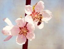 El viejo fondo de papel texturizado, abeja recoge la miel en una flor Fotografía de archivo