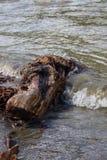 El viejo fragmento del tronco de árbol miente en una cala Altai, Rusia fotos de archivo
