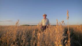 El viejo granjero caucásico del hombre en un sombrero de vaquero va en el campo de cosechas en la puesta del sol almacen de video