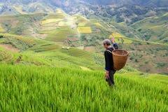 El viejo granjero trabaja y lleva cestas Fotos de archivo