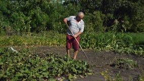 El viejo hombre es mala hierba principal que el weeding en el pueblo en el jardín con las azadas ayuda entonces a las hojas almacen de metraje de vídeo