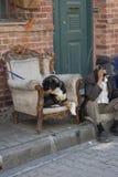 El viejo hombre que se sienta en la calle habla por el teléfono Al lado del gato se está sentando en la butaca imágenes de archivo libres de regalías