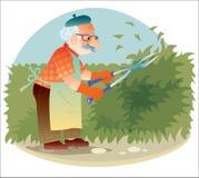 El viejo jardinero que trabaja en el jardín que corta los arbustos Foto de archivo libre de regalías