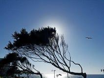 El viento barrió árboles sobre el océano Fotografía de archivo libre de regalías