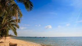 El viento sacude la rama de la palma en Azure Sea Beach Against Skyline almacen de video