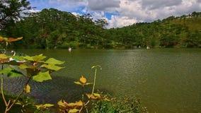 El viento sacude las hojas de la rama contra el lago con el banco de la silvicultura