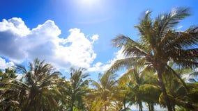 El viento sacude las palmas grandes en parque de la ciudad contra el cielo azul Azure Sea almacen de metraje de vídeo