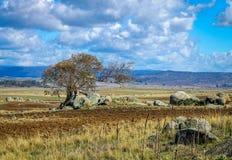 El viento solo barrió el árbol en un paisaje australiano solitario Foto de archivo