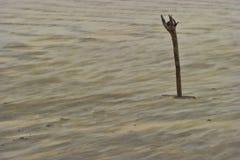 El viento sopla la arena alrededor de un palillo de la madera de deriva Imagenes de archivo