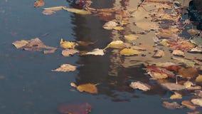 El viento sopla las hojas y el agua caidas de la ondulación el día del otoño metrajes