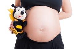 El vientre grande de la mujer embarazada y la abeja linda de la felpa juegan Foto de archivo