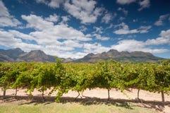 El vino de Stellenbosch aterriza la región cerca de Cape Town. Foto de archivo