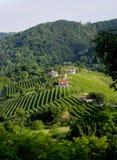 El vino es un amo en Italia Imagenes de archivo
