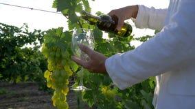 El vintage del otoño, winemaker abre la botella con alcohol y vierte el vidrio en el fondo de la uva en el viñedo en brillante almacen de video