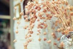 El vintage florece color fotografía de archivo