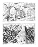 El vintage grabado, los viñedos dibujados mano ajardina, los campos tuskany, scratchboard de mirada viejo stock de ilustración