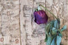 El vintage hermoso se marchitó las rosas en un fondo rústico Imagen de archivo