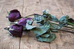 El vintage hermoso se marchitó las rosas en un fondo rústico Fotos de archivo