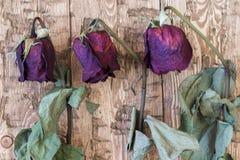 El vintage hermoso se marchitó las rosas en un fondo rústico Fotografía de archivo