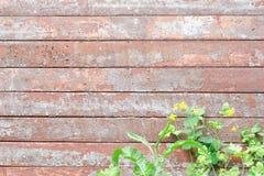 El vintage horizontal sube a la tonalidad rojo-gris, celandine de las flores en fotografía de archivo