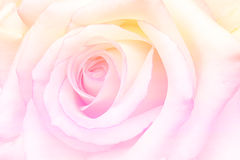 El vintage romántico Rose con el extracto empañó el fondo de la flor fotos de archivo