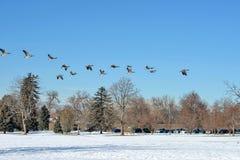 El volar al sur Imagen de archivo libre de regalías