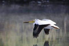 El volar bajo Foto de archivo