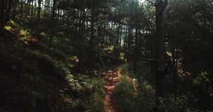 El volar bajo a través del bosque místico del concepto del horror del bosque de la mañana adentro hellowen Surise de hadas en bos almacen de metraje de vídeo