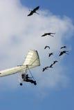 El volar con el ganso Imágenes de archivo libres de regalías