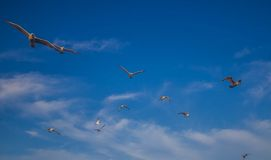 El volar con hacia fuera límites Fotos de archivo