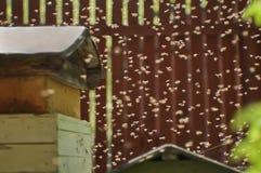 El volar de las abejas Fotografía de archivo libre de regalías