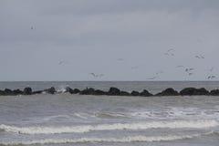 El volar de las gaviotas Fotos de archivo libres de regalías